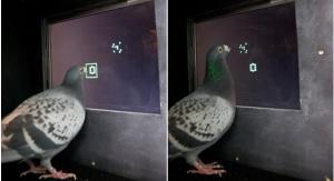 pigeon maths